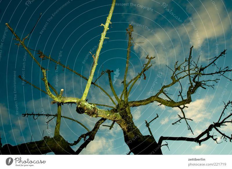 Angeblitzter Apfelbaum Natur Pflanze Himmel Wolken Herbst Wetter Baum dunkel Klima Baumstamm Herbstwetter November Oktober wallroth Ast Zweig trocken