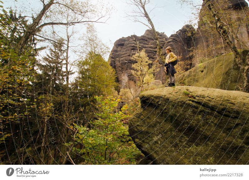 tarzan Mensch Kind Junge Kindheit Körper 1 8-13 Jahre Umwelt Natur Landschaft Herbst Baum Wald Hügel Felsen Berge u. Gebirge Jeanshose Pullover Jacke Blick
