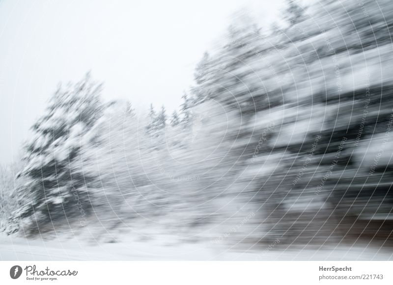 Wwwwschsch Natur grün weiß Baum Winter Wald Schnee Landschaft Eis Geschwindigkeit Frost Tanne Autofahren Schneelandschaft Textfreiraum schlechtes Wetter
