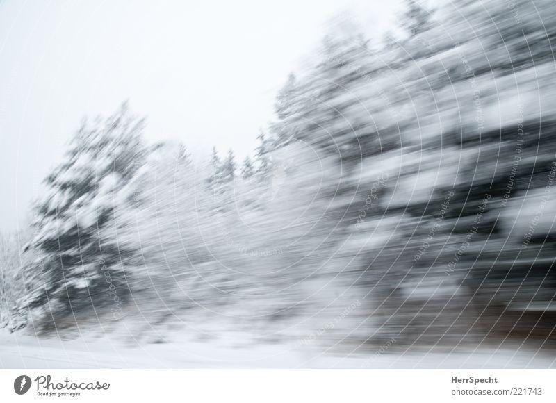 Wwwwschsch Natur Landschaft Winter schlechtes Wetter Eis Frost Schnee Baum Wald Geschwindigkeit grün weiß Winterwald Schneelandschaft Schneesturm Autofahren