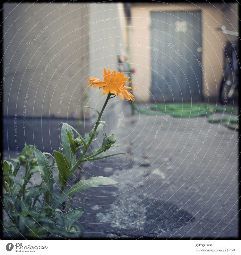 hinterhof Pflanze Blume Blatt Blüte Haus Bauwerk Gebäude Mauer Wand Fassade Tür Blühend Selbstständigkeit skurril Überleben Fahrradlenker Gartenschlauch