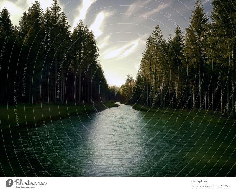 hidden Natur ruhig Ferne Wald Wiese Umwelt Fluss Klima fantastisch Idylle Urelemente Flussufer Klimawandel Nadelwald Wolkenhimmel Märchenwald