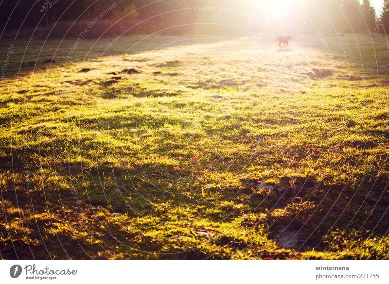 Hund Natur Sonne Landschaft Tier Umwelt Herbst Gefühle Park Zufriedenheit Feld Erde Kraft Fröhlichkeit Warmherzigkeit Romantik