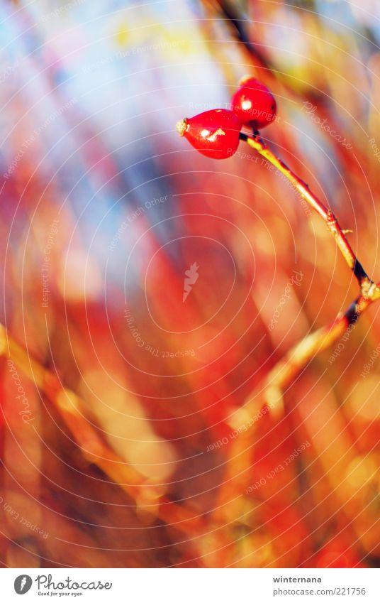 Himmel Natur schön Pflanze Erholung Freiheit Herbst Gefühle Glück Kraft Horizont Sicherheit Romantik Warmherzigkeit rein Vertrauen