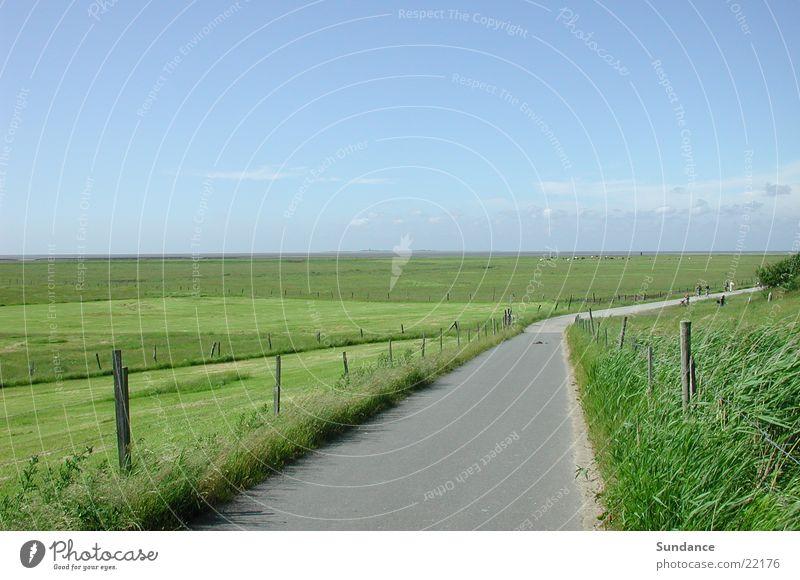 nordsee Himmel Sommer ruhig Wiese Horizont Europa Kuh Zaun Nordsee Neuwerk