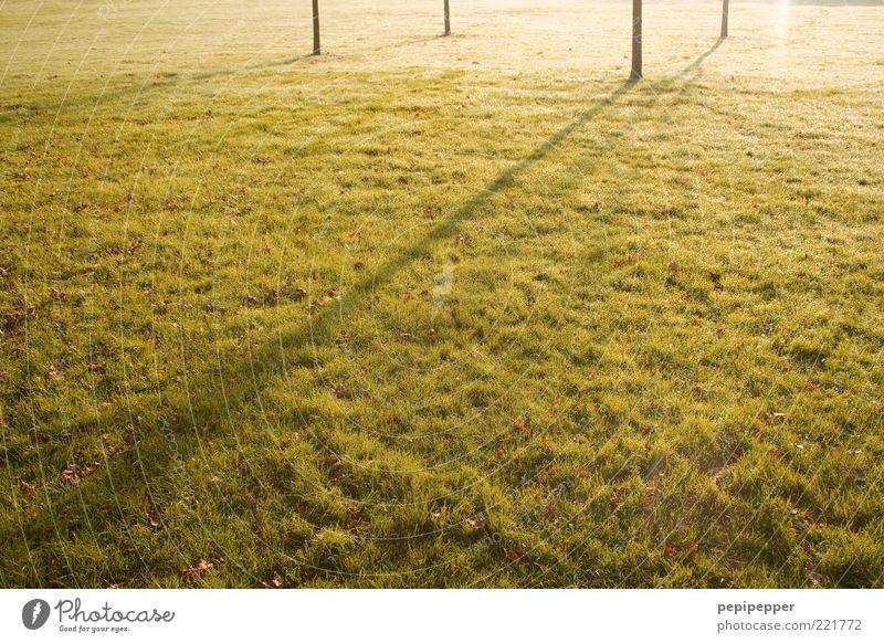 I I / I Natur grün Pflanze Sommer gelb Wiese Gras Landschaft Linie dünn Streifen Halm Baumstamm Schönes Wetter Textfreiraum Sonnenuntergang