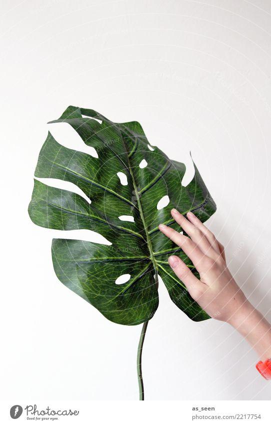 Pflanzenliebhaber Dekoration & Verzierung Wohnzimmer Hand Blatt Grünpflanze Topfpflanze Philodendron Fensterblätter berühren authentisch Freundlichkeit