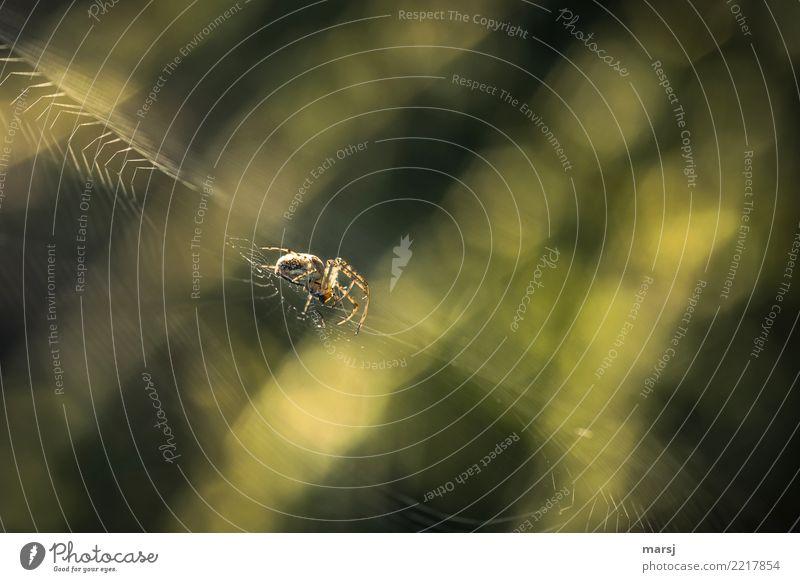 Jenseits des (Wohlfühl) mainstreams | mit Gruselfaktor Tier Spinne 1 Spinnennetz beobachten festhalten krabbeln warten Ekel gruselig natürlich grün achtsam