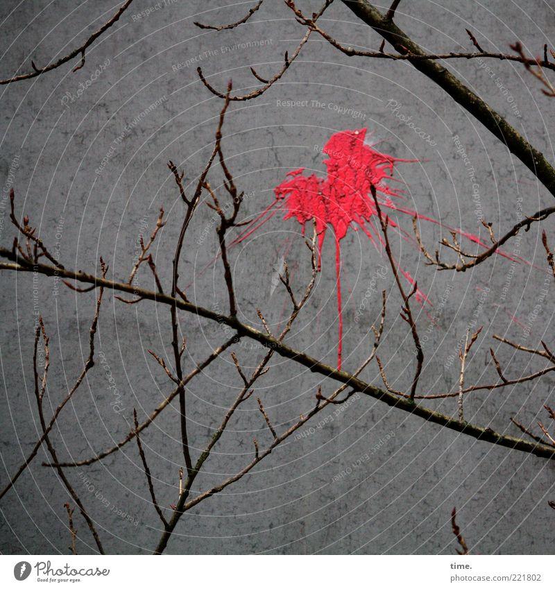 HH10.2 | Optical Opinion Baum Pflanze rot Farbe Herbst Wand grau Farbstoff Beton Ast außergewöhnlich Zeichen Verbote werfen spritzen