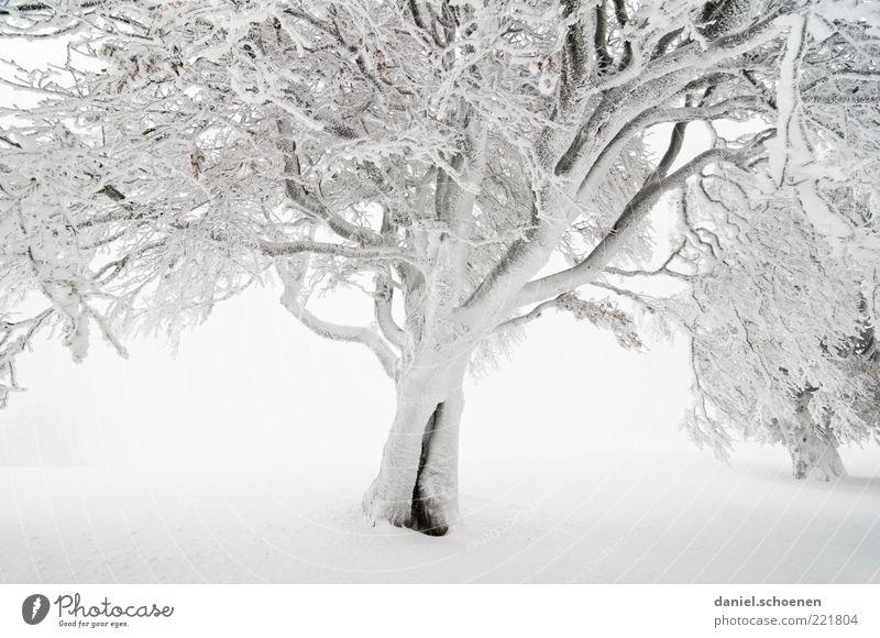 Zauberwald Natur weiß Baum Winter Schnee Eis hell Nebel Umwelt Frost Klima Ast Schwarzwald Buche Winterstimmung Nebelwand