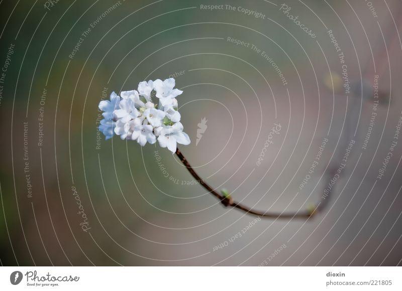 14. November 2010 Natur schön Pflanze Blüte Umwelt Blühend Blütenblatt Frühlingsgefühle hell-blau Wildpflanze