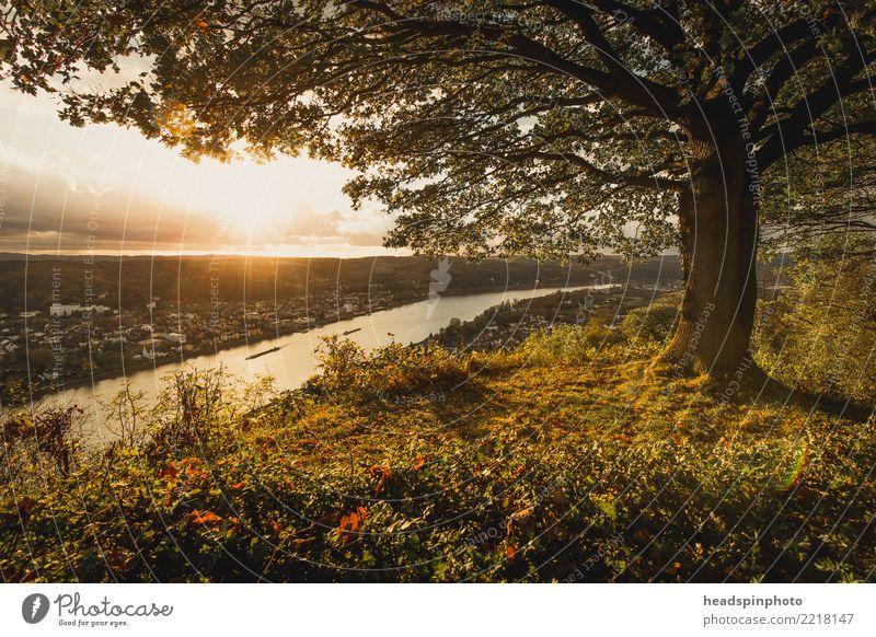 Aussicht auf das Rheintal bei Bonn im goldenen Herbst Natur Landschaft Himmel Wolken Hügel Gipfel Fluss Erpel positiv Einsamkeit Erholung Freiheit