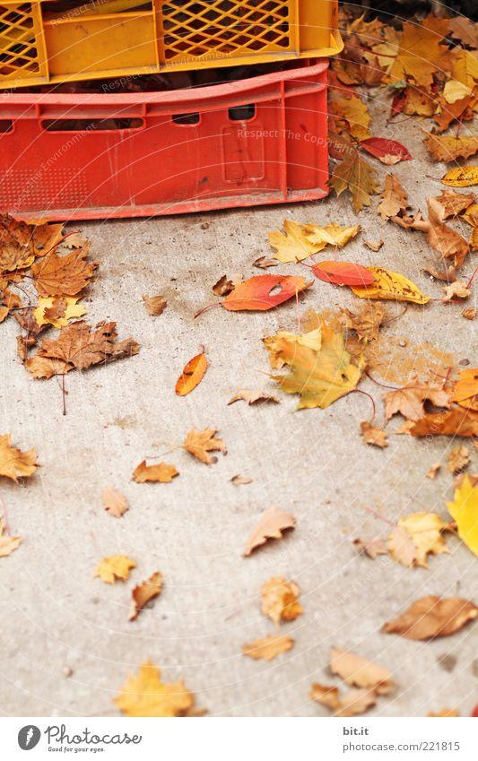 Kisten Buntes rot Blatt gelb Herbst grau braun gold Beton Ordnung Kommunizieren Boden liegen unten Kunststoff Jahreszeiten trocken