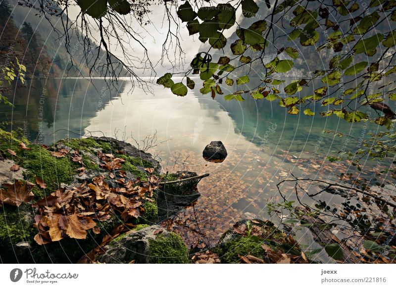 Stilles Wasser Natur Landschaft Himmel Wolken Herbst Baum Berge u. Gebirge Seeufer braun grau grün Königssee Farbfoto Gedeckte Farben mehrfarbig Außenaufnahme