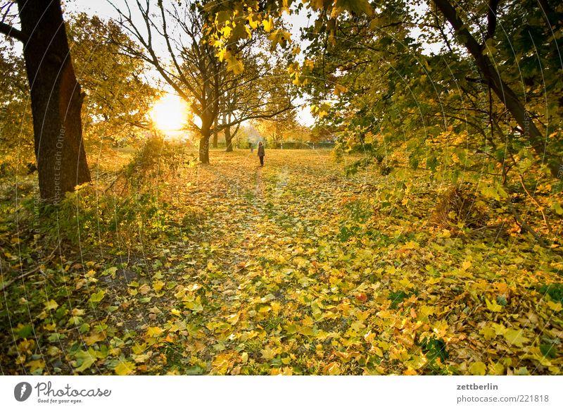 Herbst 1 Mensch Umwelt Natur Landschaft Pflanze Erde Sonnenaufgang Sonnenuntergang Sonnenlicht Wetter Schönes Wetter Baum Blatt Park Optimismus Oktober wallroth