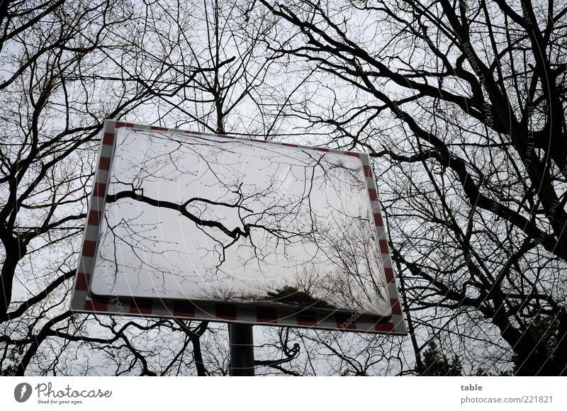 nichts ist wie es scheint... Natur Himmel Baum Winter ruhig schwarz dunkel kalt Herbst Gefühle Holz grau Metall Glas Umwelt groß