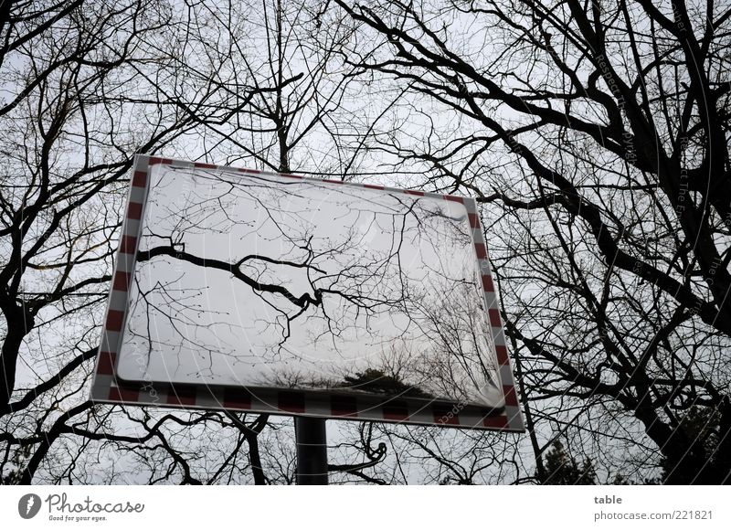 nichts ist wie es scheint... Umwelt Natur Himmel Herbst Winter Baum Spiegel Holz Glas Metall dunkel eckig kalt grau schwarz Gefühle ruhig bizarr Endzeitstimmung