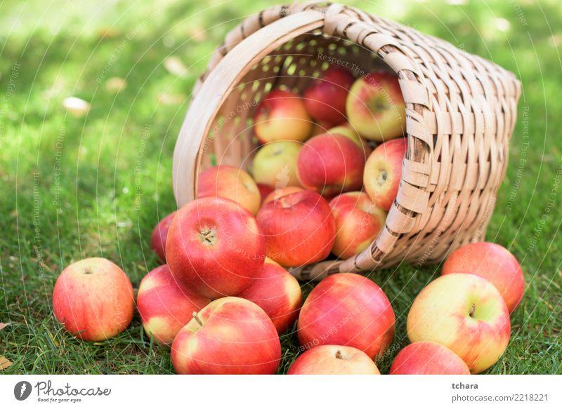 Reife Äpfel Frucht Apfel Saft Sommer Garten Natur Landschaft Pflanze Herbst Baum Gras Blatt Container Wachstum frisch hell lecker natürlich saftig grün rot weiß