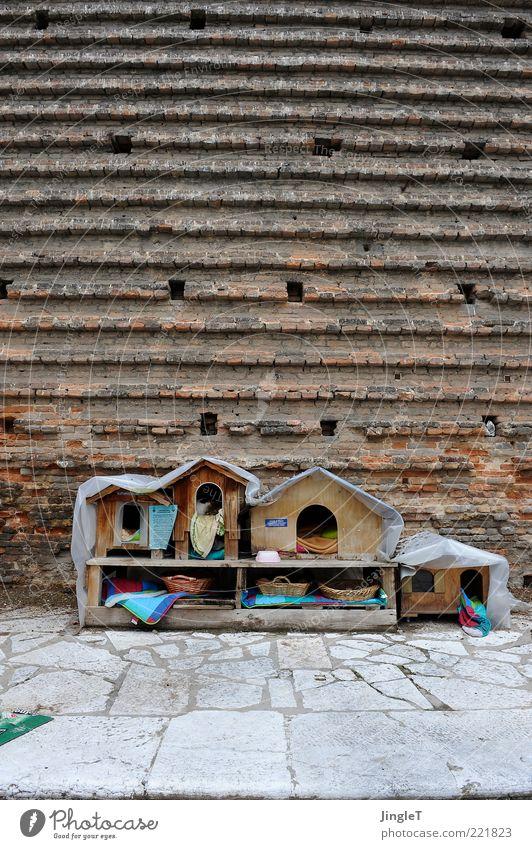 urban kitten rot Haus Tier Wand Holz Katze braun klein Fassade außergewöhnlich Gebäude Lebensraum