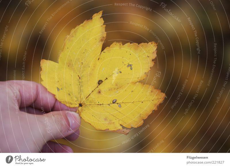 Christoph Maria Blatt Natur Hand alt Blatt Farbe Herbst Umwelt Finger Klima natürlich festhalten November Blattadern Herbstlaub Oktober herbstlich