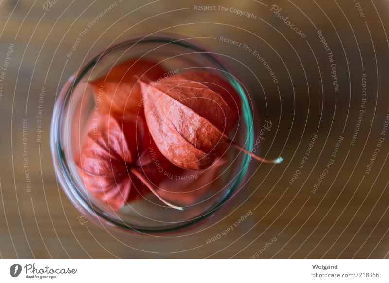 Herbstvorrat I Frucht Ernährung Bioprodukte Vegetarische Ernährung Diät Fasten Slowfood Raum dehydrieren orange trösten dankbar achtsam Gelassenheit geduldig