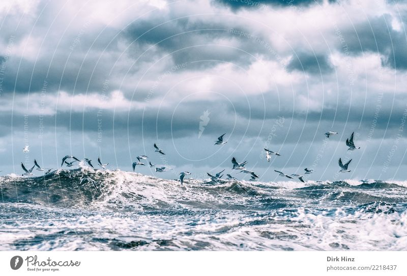 Sturm Herwart und die Ostseemöwen Himmel Natur Meer Tier Wolken Umwelt Herbst Küste Bewegung Vogel fliegen Wellen Luft Wildtier Tiergruppe Flügel