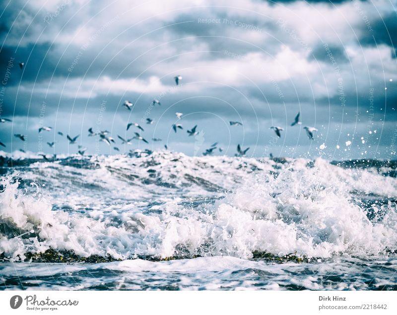 Möwen über den Ostseewellen II Umwelt Natur Landschaft Urelemente Luft Wasser Himmel Wolken Gewitterwolken Horizont Herbst Winter schlechtes Wetter Unwetter