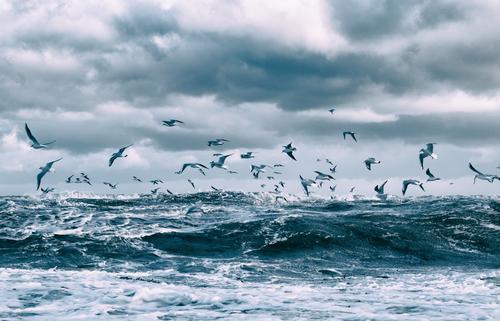 Möwen über den Ostseewellen III Himmel Natur Wasser Landschaft Meer Wolken Ferne Winter Umwelt Herbst Küste Bewegung fliegen Horizont Wetter Wellen