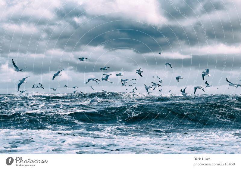Möwen über den Ostseewellen III Umwelt Natur Landschaft Luft Wasser Himmel Wolken Gewitterwolken Horizont Herbst Winter Klimawandel Wetter schlechtes Wetter