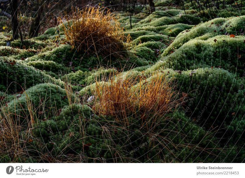 Schwenninger Moos Erholung ruhig Ferien & Urlaub & Reisen Tourismus Ausflug Umwelt Natur Pflanze Sträucher Wiese liegen nass natürlich grün Umweltschutz Moor