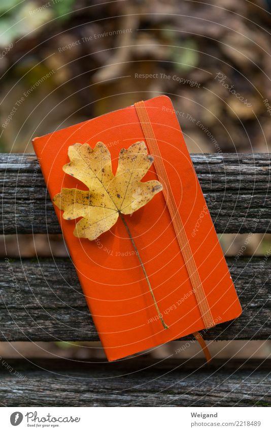 Erinnerungen Erholung Blatt ruhig gelb Herbst Traurigkeit Tod orange Zufriedenheit retro Lebensfreude Neugier Hoffnung Trauer Glaube schreiben