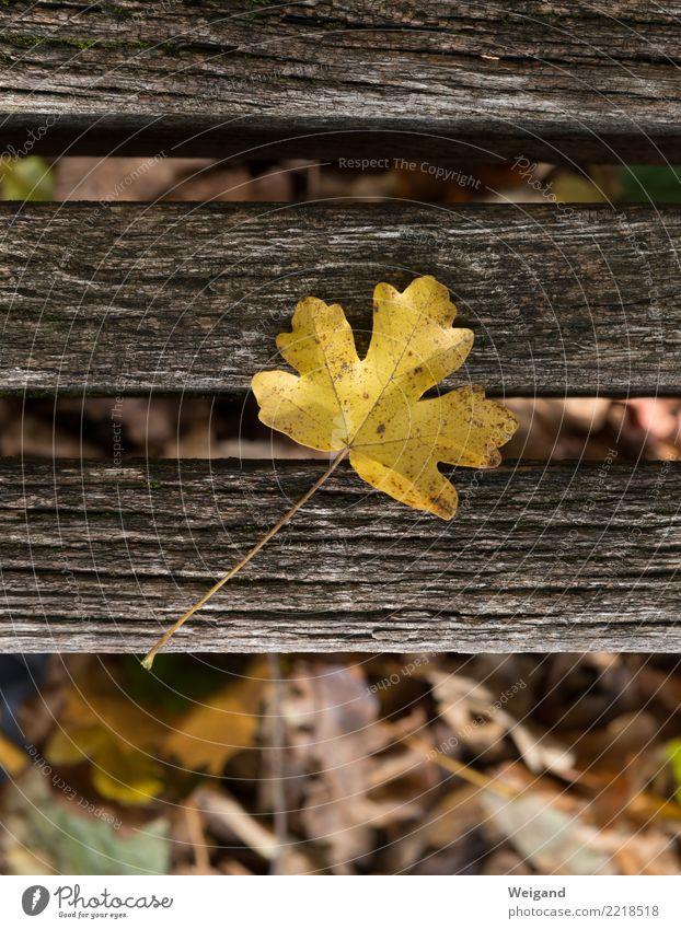 Zeitliches Trauerfeier Beerdigung Pflanze Baum Park alt dehydrieren braun gelb Zufriedenheit Treue achtsam Traurigkeit Sorge Tod Müdigkeit Natur Verfall Herbst