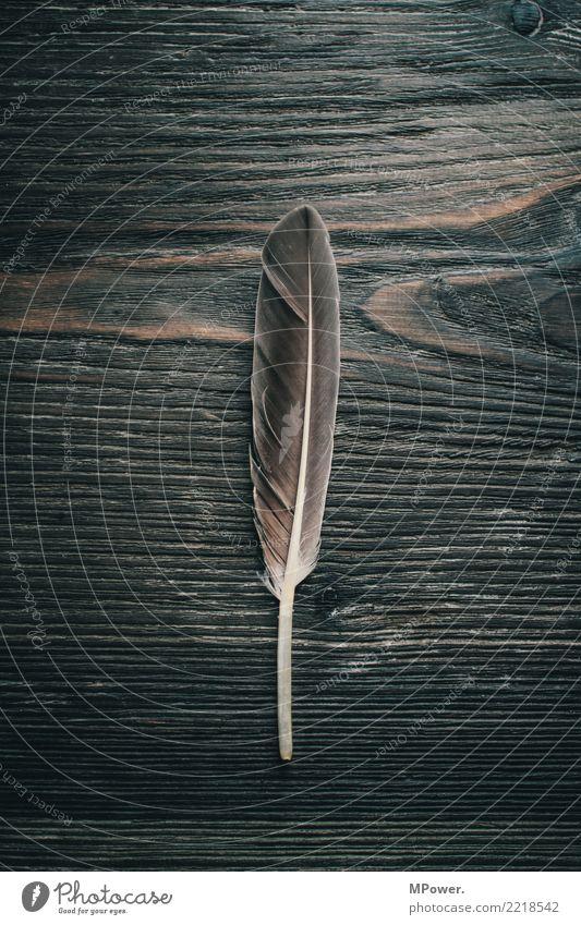 ehemals ein schreibinstrument Holz alt Feder Holzstruktur Schreibstift schreiben Schreibfeder grau Gedeckte Farben Innenaufnahme Nahaufnahme Menschenleer