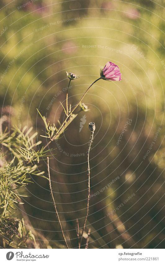 Sonne auf dem Rücken Natur Blume Pflanze Sommer Blatt Leben Wiese Herbst Blüte Gras Landschaft violett Stengel Schönes Wetter Blütenknospen Blütenblatt