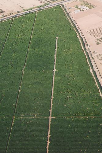 #A# water in the desert Natur grün Umwelt Sand Feld ästhetisch Wüste gießen Marokko Bewässerung