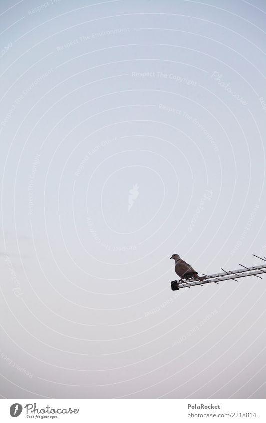 #A# Täubchen Kunst ästhetisch Taube taubenblau Vogel Idylle Ferien & Urlaub & Reisen Einsamkeit Farbfoto Gedeckte Farben Außenaufnahme Detailaufnahme Experiment
