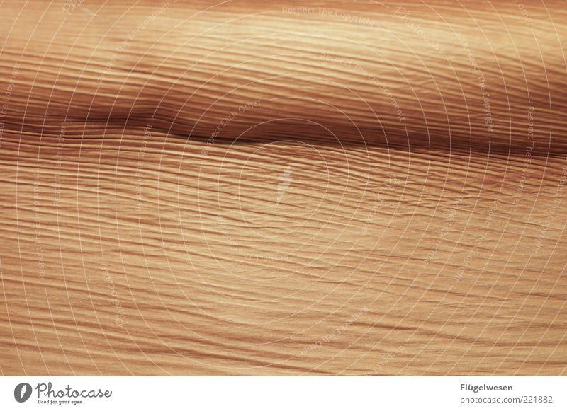 - Natur Pflanze Holz Linie braun Hintergrundbild Design Umwelt Wüste Falte Palme Faser welk Muster Palmenwedel Kork