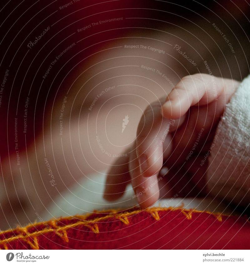 tiny hand Mensch Kind Hand weiß rot ruhig Gesicht Erholung Leben Wärme Kopf klein braun Kindheit Zufriedenheit Baby