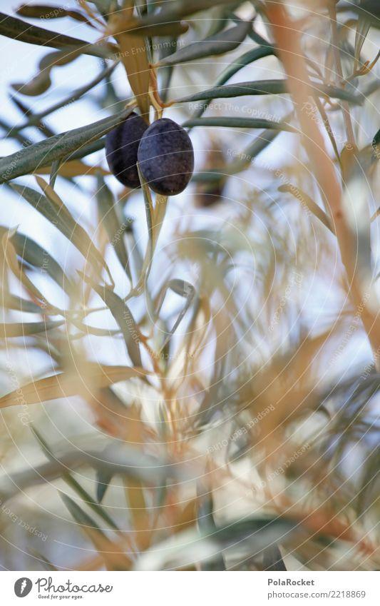#A# Schwarze Oliven Umwelt Natur Pflanze ästhetisch Olivenbaum Olivenöl Olivenblatt Olivenernte mediterran Spanien Farbfoto Gedeckte Farben Außenaufnahme