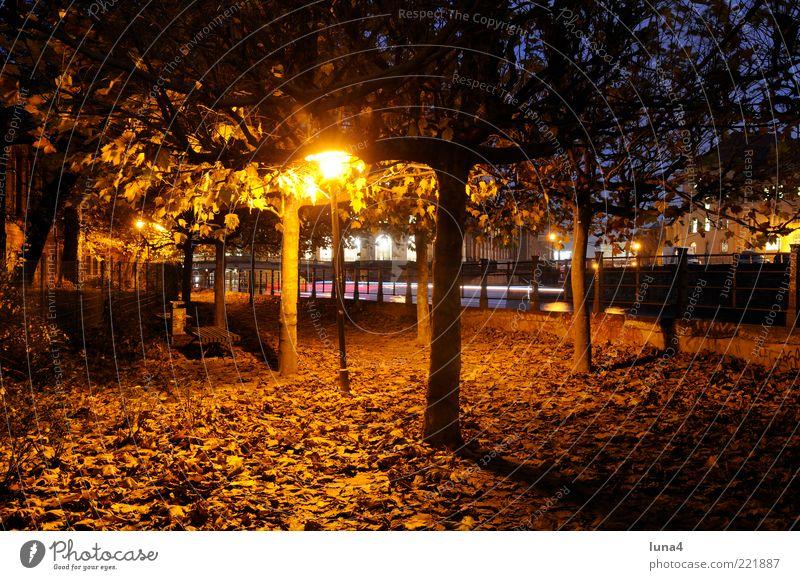 Herbstlicht Natur Baum Blatt Park Hauptstadt Wege & Pfade gelb gold Romantik Einsamkeit Idylle Jahreszeiten Farbfoto Außenaufnahme Menschenleer Abend Dämmerung