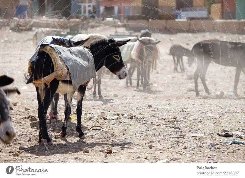 #A# Eselmarkt Kunst ästhetisch Eselsohr Eselfohlen Markt Arabien Naher und Mittlerer Osten Marokko Marrakesch Farbfoto Gedeckte Farben Außenaufnahme