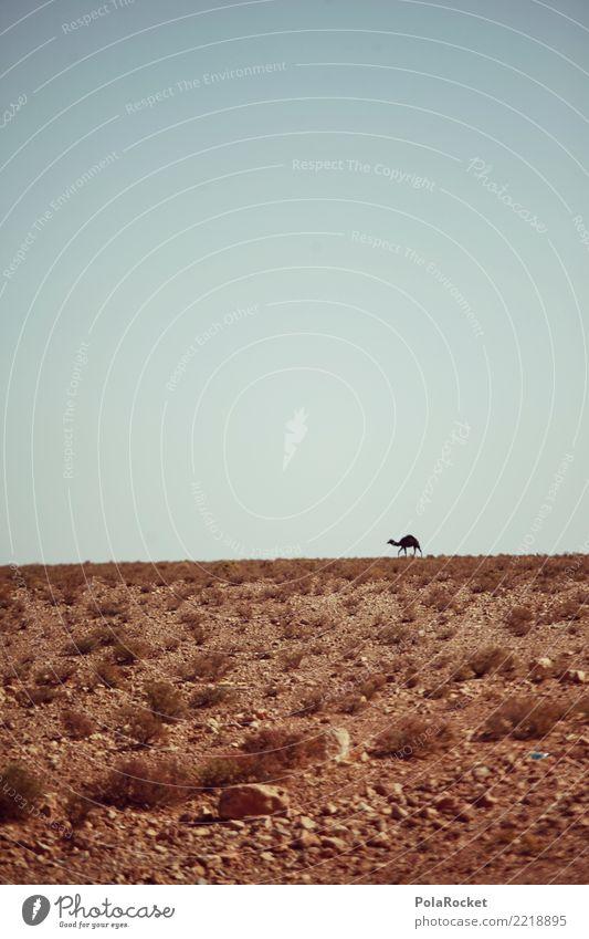 #A# Hitzetier Landschaft ästhetisch Kamel Kamelhöcker Kameltreiber Wüste Wüstenpflanze Wärme heiß Tier Farbfoto mehrfarbig Außenaufnahme Nahaufnahme Experiment