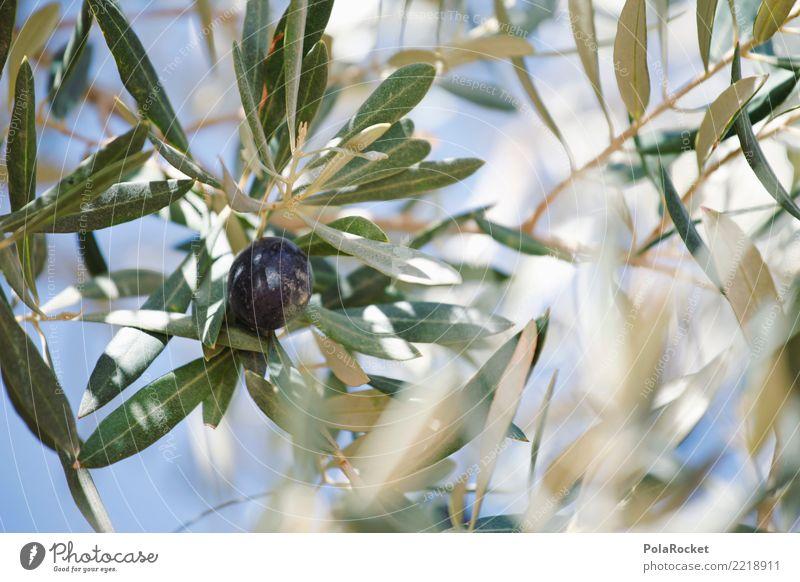 #A# Olivenschwarz Umwelt Natur ästhetisch Klima Olivenbaum Olivenöl Olivenhain Olivenblatt Olivenernte ökologisch Bioprodukte mediterran Farbfoto