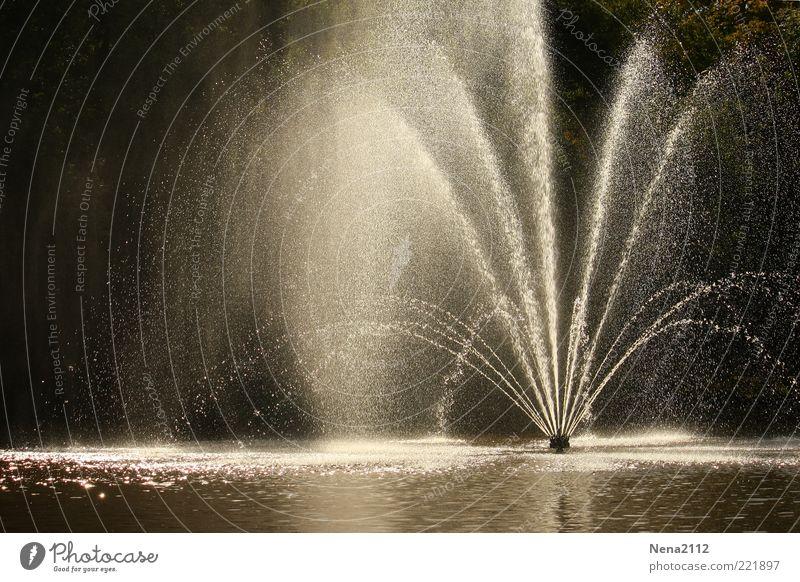 Erfrischung Wasser schön kalt nass Wassertropfen ästhetisch Teich spritzen Erfrischung Springbrunnen Perspektive Wasserfontäne spritzig