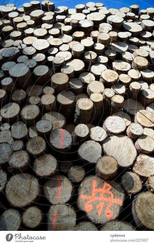 Holz vor der Hütte Güterverkehr & Logistik Umwelt Baum Ende Leben planen Tod Vergangenheit Vergänglichkeit Wert Baumstamm Stapel viele Höhe Barriere