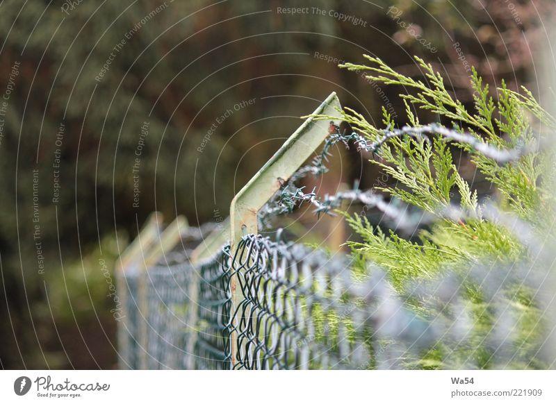 ausgegrenzt Natur grün Blatt Garten grau Linie braun Metall Sicherheit bedrohlich Schutz Grenze silber Verbote Zweig Trennung