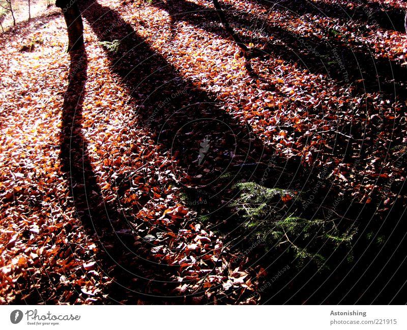 Schatten Umwelt Natur Landschaft Pflanze Herbst Schönes Wetter Baum Wildpflanze Wald Hügel lang braun schwarz Holz Ast Blatt Linie Zweig Laubbaum Herbstlaub