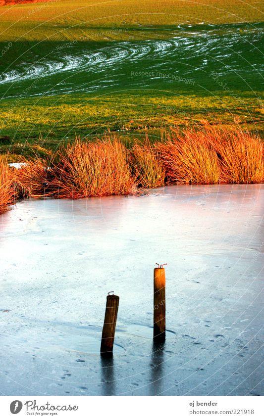Sonne und Eis Wasser schön Winter kalt Stil Landschaft Frost Sträucher natürlich gefroren Seeufer Teich Holzpfahl Eisfläche Winterstimmung