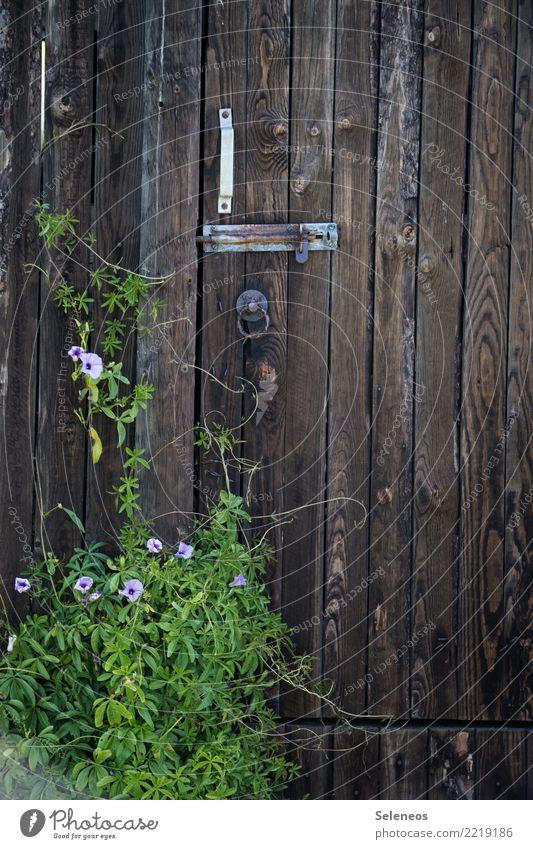 Heute wegen Grünzeug geschlossen Umwelt Natur Frühling Sommer Blume Blatt Blüte Grünpflanze exotisch Garten Park Tür Schloss natürlich Rost Farbfoto