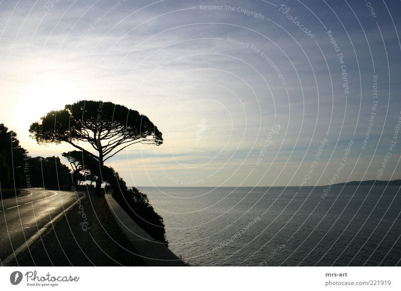 Côte d'Azur - Küstenstraße schön Baum Meer Ferne Horizont Kurve Schönes Wetter Klippe Mittelmeer Landstraße Morgen Französisch Südfrankreich Cote d'Azur